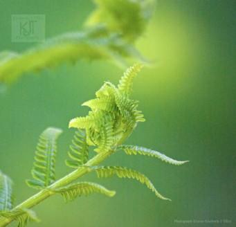 green, fern,
