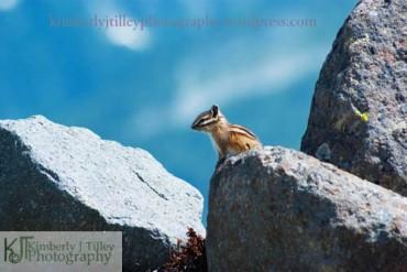 a chipmunk ontop of a large rock