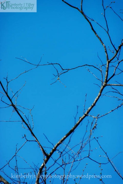heart shape tree branch