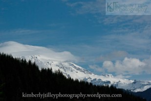 pine trees and a snow covered mountain top