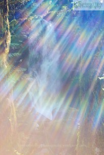 a waterfall in the Olympic National Park is hidden behind a rainbow light