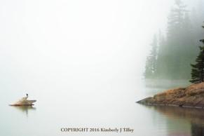 photograph, lake, trees, bird, fog, washington, nature, landscape,