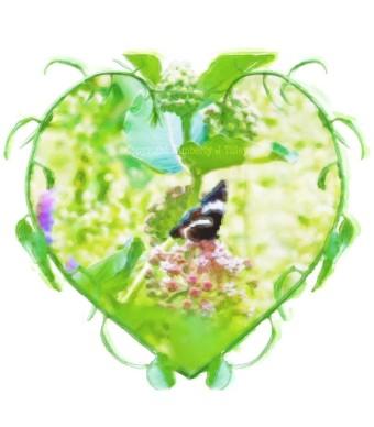 wp-butterfly-milkweed-painting_kimberlyjtilley-2016