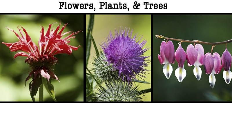 Banner for the gallery page of plants, flowers and trees.