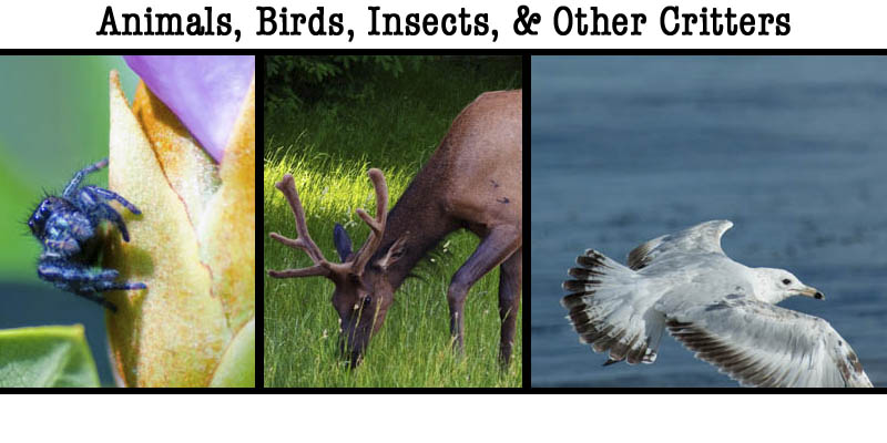 A Banner for the wildlife gallery featuring birds, insects, mammals.